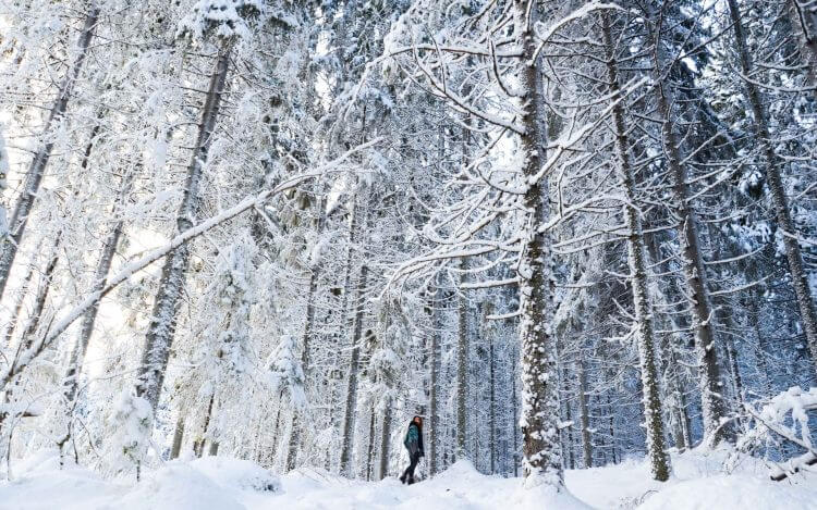 Финлядия