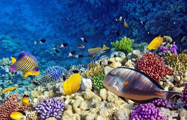 Уникальные обитатели Красного моря