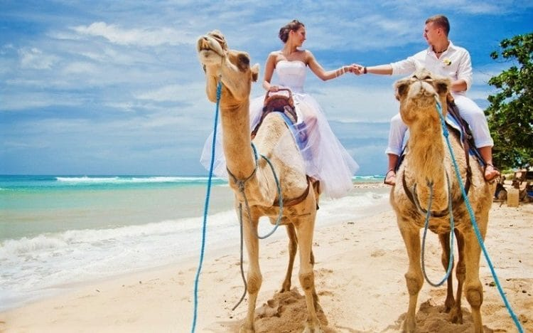 медовый месяц на теплом побережье Красного моря